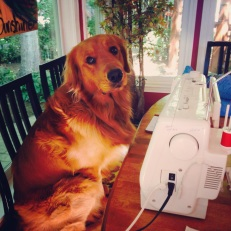 Our dog Wilson is my biggest helper.